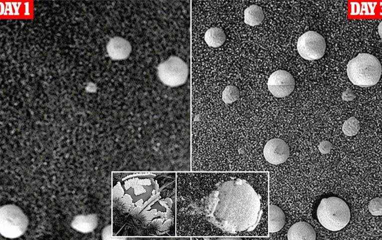 Scientists have claimed to have found evidence of FUNGI on the Red Planet